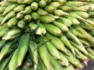 TEC Grills Summer Grilled Corn
